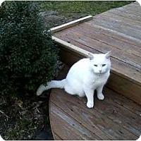 Adopt A Pet :: Ralph - Xenia, OH