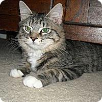 Adopt A Pet :: Logan - Arlington, VA