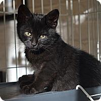 Adopt A Pet :: Batman - Brooklyn, NY