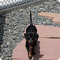 Adopt A Pet :: Hans - Louisville, CO