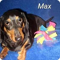 Adopt A Pet :: Max - Chandler, AZ