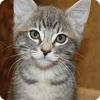 Adopt A Pet :: Mary Lou - Irvine, CA