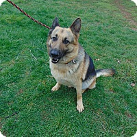 Adopt A Pet :: Samantha - Portland, ME