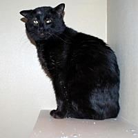 Adopt A Pet :: Azlan - Pryor, OK