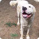 Adopt A Pet :: Bianco