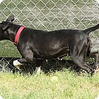 Adopt A Pet :: Socks - Sylvania, GA