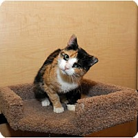 Adopt A Pet :: Blair - Farmingdale, NY