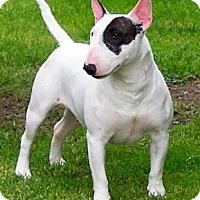 Adopt A Pet :: Ralphie - Canoga Park, CA