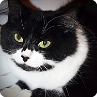 Adopt A Pet :: Tessa - Xenia, OH