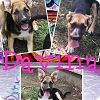 Adopt A Pet :: Davina - Cheney, KS