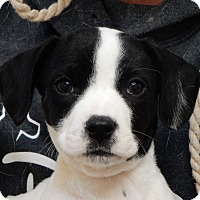 Adopt A Pet :: Cody - Long Beach, NY