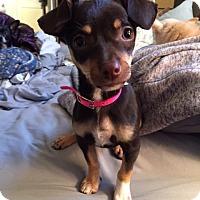 Adopt A Pet :: Tempest - San Diego, CA