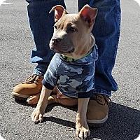 Adopt A Pet :: Kratos - Clarksville, TN