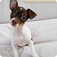 Adopt A Pet :: Rae Rae - Thousand Oaks, CA