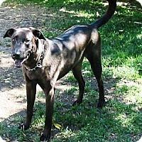 Adopt A Pet :: Digory - Gilbert, AZ