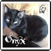 Adopt A Pet :: Onyx - Mobile, AL