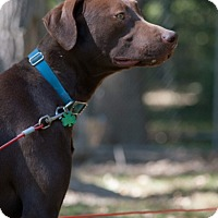 Adopt A Pet :: Gusto - Lewisville, IN
