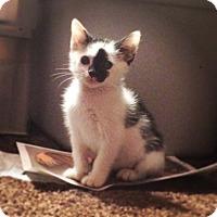Adopt A Pet :: Jasmine - Newfield, NJ