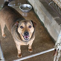 Adopt A Pet :: Bandit - Nashville, GA