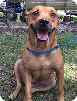 Boxer/Hound (Unknown Type) Mix Dog for adoption in Adamsville, Tennessee - Daphne