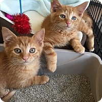 Adopt A Pet :: Brooklyn - Horsham, PA