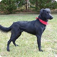 Adopt A Pet :: Landon - Mocksville, NC