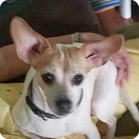 Adopt A Pet :: Maggie Mae - Louisville, IL