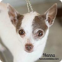 Adopt A Pet :: HANNA - Modesto, CA