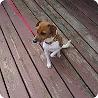 Adopt A Pet :: Lily - Wisconsin Dells, WI