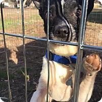 Adopt A Pet :: Rico - Hayes, VA