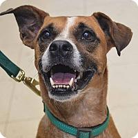 Adopt A Pet :: Sissy - Pittsburg, KS