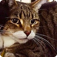 Adopt A Pet :: Sampson - East Brunswick, NJ