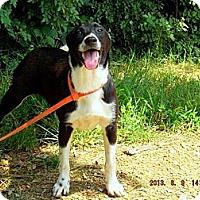 Adopt A Pet :: Bambi - Oakland, AR
