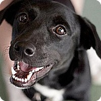 Adopt A Pet :: Ali URGENT!! - Sunset, LA