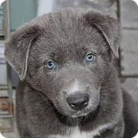 Adopt A Pet :: Redford - La Habra Heights, CA