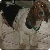 Adopt A Pet :: Hope - Phoenix, AZ