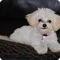 Adopt A Pet :: Annabelle - ORANGE COUNTY, CA
