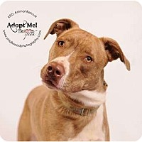 Adopt A Pet :: Fablous Ford- new pic - Glastonbury, CT