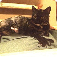 Adopt A Pet :: Heidi - Ogallala, NE