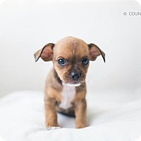 Adopt A Pet :: Jepson - Homewood, AL