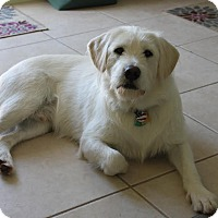 Adopt A Pet :: Shadow - Ormond Beach, FL