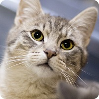 Adopt A Pet :: Evan - Chicago, IL