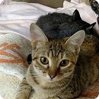Adopt A Pet :: Evie - Maryville, TN