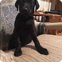 Adopt A Pet :: Vioet - Stamford, CT