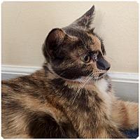 Adopt A Pet :: AUTUMN - Hamilton, NJ