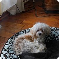 Adopt A Pet :: Gunter - West Deptford, NJ