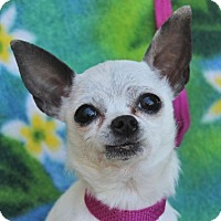 Adopt A Pet :: TESSA-Low Fees/Spayed - Red Bluff, CA