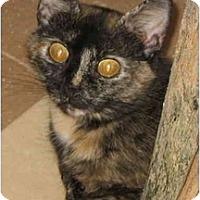 Adopt A Pet :: Heidi - Cincinnati, OH