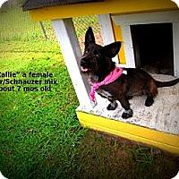 Adopt A Pet :: Callie - Gadsden, AL