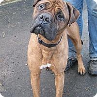 Adopt A Pet :: Zoey - Roy, WA